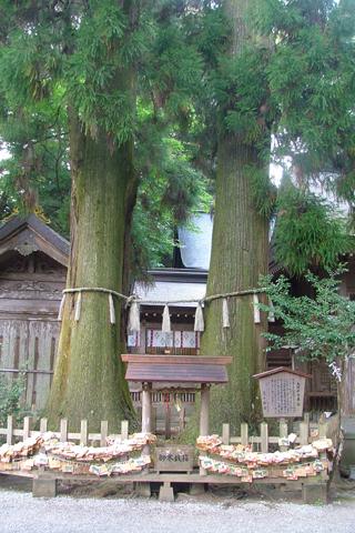高千穂神社 めおと杉