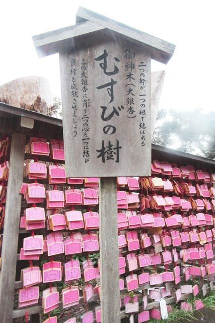 江島神社 むすびの樹 待ち受け画像