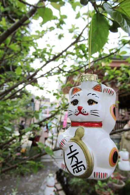 今戸神社 東京 ねこ